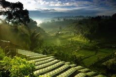 Landwirtschaft Farmfield Stockfoto