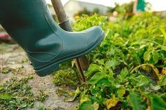 Landwirtschaft, Gartenarbeit, Landwirtschaft und Leutekonzept stockfoto