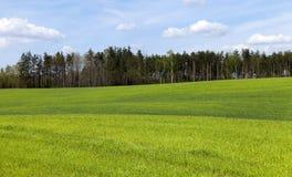 landwirtschaft getreide Frühling Stockfoto