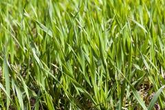 landwirtschaft getreide Frühling Lizenzfreies Stockbild