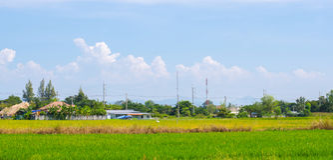 Landwirtschaft in den ländlichen Gebieten Lizenzfreie Stockfotos