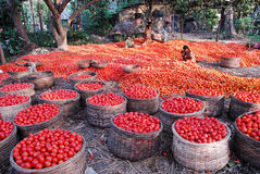 Landwirtschaft in Indien lizenzfreie stockfotografie