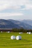 Landwirtschaft in Island Lizenzfreie Stockfotos
