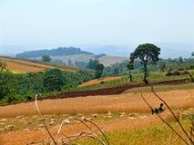 Landwirtschaft. Leute, die auf dem Gebiet arbeiten. Afrika, Äthiopien, Jiga Stockfoto