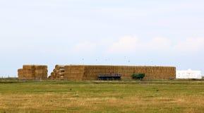 Landwirtschaft nahe Knävången, Falsterbo, Schweden Lizenzfreie Stockfotografie