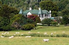 Landwirtschaft in Neuseeland NZ NZL Stockfotografie