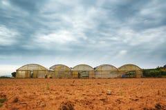 Landwirtschaft und Landwirtschaftshintergrund mit einigen verwitterten Gewächshäusern nahe bei Ackerland Bewölkter Himmel und lee Stockfotos