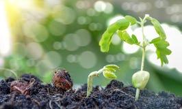 Landwirtschaft und Säen des Betriebssaatbau-Schrittkonzeptes Stockbilder