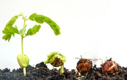 Landwirtschaft und Säen des Betriebssaatbau-Schrittkonzeptes Lizenzfreies Stockbild