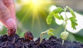 Landwirtschaft und Säen des Betriebssaatbau-Schrittkonzeptes Lizenzfreie Stockfotografie