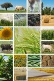 Landwirtschaft und Viehwirtschaft. Lizenzfreies Stockbild