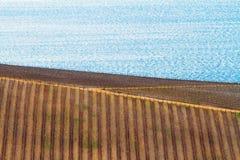 Landwirtschaft und Weinkellerei in Kroatien, Naturhintergrund Stockfotografie