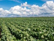 Landwirtschaft und Windkraftanlagen im Polder, Holland Stockbild