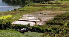 Landwirtschaft von Aceh Stockfotografie