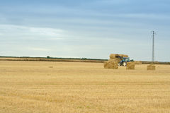 Landwirtschaft von Irland Stockbild