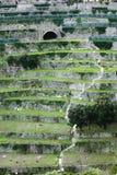 Landwirtschaft von Terrassen Lizenzfreies Stockfoto