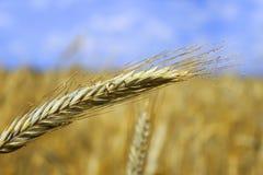 Landwirtschaftlich Lizenzfreies Stockfoto