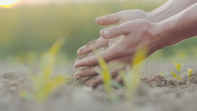 Landwirtschaftlich, bewirtschaftend - bemannen Sie Untersuchungsboden in den Händen, bevor Sie pflanzen stock video footage