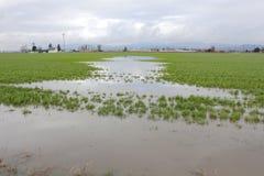 Landwirtschaftliche Überschwemmung Stockbild