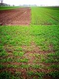 Landwirtschaftliche Ansicht Künstlerischer Blick in den Weinlesekräftigen farben Lizenzfreie Stockfotografie