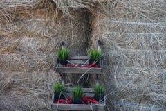 Landwirtschaftliche Auslegung Stockbilder