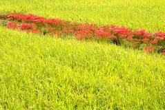 Landwirtschaftliche Bezirke Lizenzfreies Stockfoto