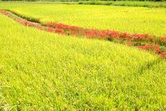 Landwirtschaftliche Bezirke Lizenzfreie Stockfotos