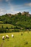 Landwirtschaftliche britische Landschaft Stockfotografie