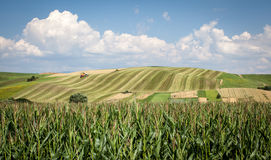 Landwirtschaftliche Felder Lizenzfreie Stockbilder