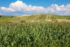 Landwirtschaftliche Felder Stockfotos