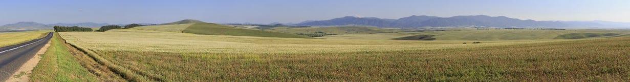 Landwirtschaftliche Felder des schönen Panoramas im August Stockfotografie