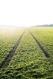 Landwirtschaftliche Felder Frühlingszeit… Rosenblätter, natürlicher Hintergrund Spuren im Land vom Traktor Sonnenuntergang Stockbild
