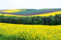 Landwirtschaftliche Felder gesät mit Getreide Lizenzfreie Stockfotos