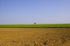 Landwirtschaftliche Felder im Land Lizenzfreies Stockfoto