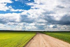 Landwirtschaftliche Felder mit Weizen und Roggen Lizenzfreies Stockbild