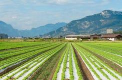 Landwirtschaftliche Felder in Norditalien Lizenzfreies Stockfoto