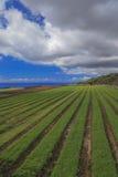 Landwirtschaftliche Felder in Teneriffa Stockbild