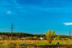 Landwirtschaftliche Felder und Stadt auf Horizont, Ukraine Stockfotografie
