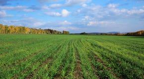 Landwirtschaftliche Felder und Wiesen Lizenzfreies Stockfoto