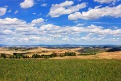 Landwirtschaftliche Felder von ` Orcia Val d in Toskana, Italien Lizenzfreie Stockfotos