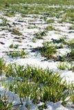 Landwirtschaftliche Forderung durchgesetzt durch Schnee Lizenzfreies Stockbild