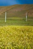 Landwirtschaftliche grasartige Landschaft lizenzfreies stockfoto
