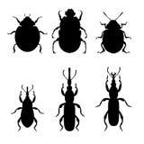 Landwirtschaftliche Insektenplagen vektor abbildung