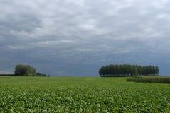 Landwirtschaftliche Landschaft Lizenzfreies Stockfoto