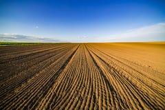 Landwirtschaftliche Landschaft, Ackerfruchtfeld Stockbild