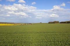 Landwirtschaftliche Landschaft in den Yorkshire-Wolds Stockbild
