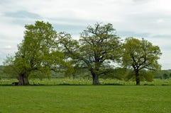 Landwirtschaftliche Landschaft in der englischen Landschaft Stockbilder