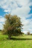Landwirtschaftliche Landschaft in der englischen Landschaft Lizenzfreie Stockbilder