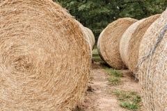Landwirtschaftliche Landschaft der Sommerzeit Stockfotos