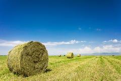 Landwirtschaftliche Landschaft der Sommerzeit Stockbild